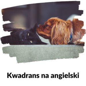 Zwierzęta domowe - Kwadrans Na Angielski - Lekcja 84